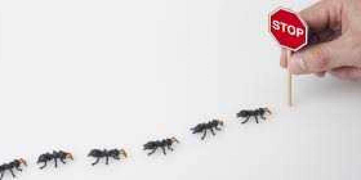 Basic Pest Control Tips